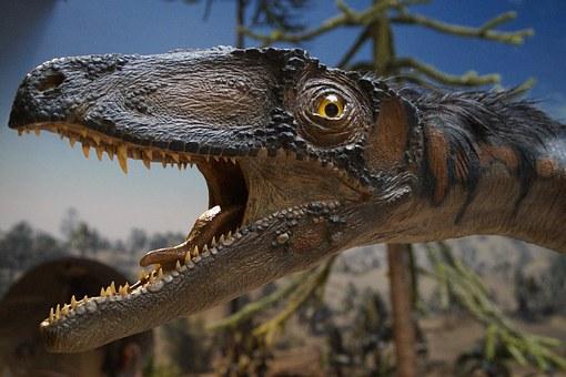 Best Museums exhibits dinosaur